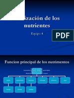 Utilización de los nutrientes