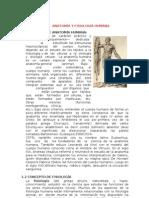 Anatomia Fisiologia Humana