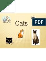 3  cats2