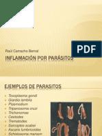 Inflamación por parásitos