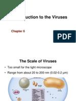 Ch 6 Virus
