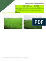 2012WS MET 2-Irrigated - Week 7 (August) Isabela