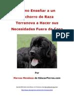 Como Enseñar a un Cachorro de Raza Terranova a Hacer sus Necesidades Fuera de Casa