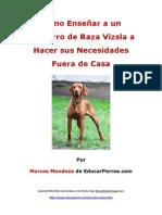 Como Enseñar a un Cachorro de Raza Vizsla a Hacer sus Necesidades Fuera de Casa