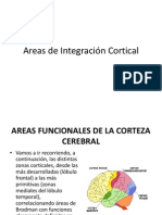 Areas de Integración Cortical