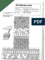 Cut Out Biology Models 1