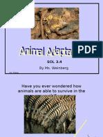 Animal Adaptations PPT[1]