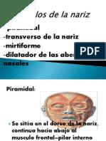 músculos de la nariz2