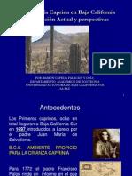Caprinos en Baja California sur, situación actual y perspectivas