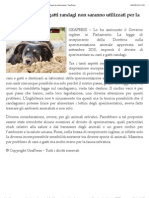 Inghilterra – cani e gatti randagi non saranno utilizzati per la vivisezione