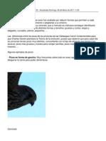 06 Aves -Tipos de Pico