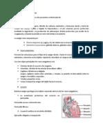 Sistema Cardiovascular 4 Resumen