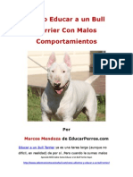 Como Educar a Un Bull Terrier Con Malos Comportamientos