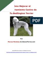 Como Mejorar el Comportamiento Canino de tu Bedlington Terrier