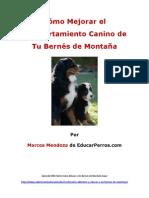 Como Mejorar el Comportamiento Canino de tu Bernýýs de Montaýýa