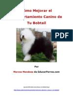 Como Mejorar el Comportamiento Canino de tu Bobtail