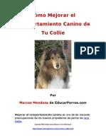 Cýýmo Mejorar el Comportamiento Canino de tu Collie