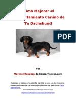 Cýýmo Mejorar el Comportamiento Canino de tu Dachshund