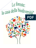 Articolo foreste 1A