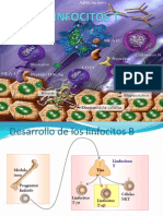 Linfocitos T