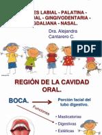 topograficaregionesdelacara-111111201446-phpapp02