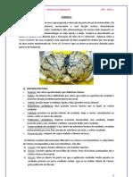 Cerebelo. PDF