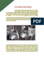 Animales Salvajes Diana Sanchez