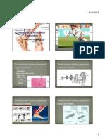 Biomecânica dos Tendões e Ligamentos