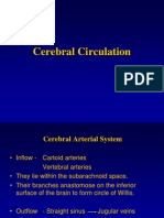 CNS Blood Circulation