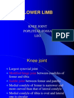 Lower Limb_Knee Joint,Poplitial Fossa & Leg