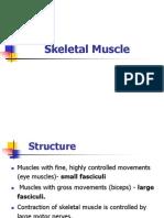 Muscular Tissue_Skelital Muscle