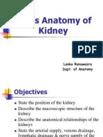 Abdomen & Pelvis_Anatomy of Kidney2004
