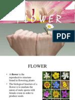 Flower Lab Discuss