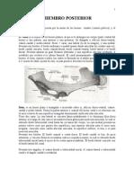 Osteologia Miembro Posterior y Columna