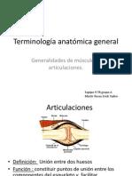 Terminología anatómica general art y mus