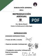 2º Clase-Conidiogénesis-2011 para imprimir [Modo de compatibilidad]