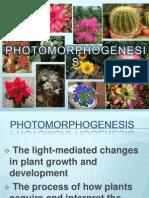 Photo Morphogenesis