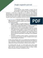 Histología segundo parcial