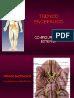 16- TRONCO ENCEFALICO-1