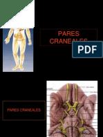 20- Pares Craneales