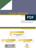 Sistema Nervioso &