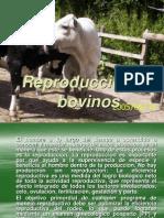 Reproducción en bovinos.ppt