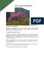 Árbol Nacional de El Salvador El Maquilishuat