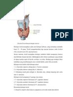 Anatomi Dan Fisiologi Tiroid