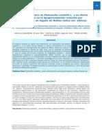 Estudio fitoquímico de Plukenetia volubilis L. y su efecto