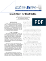 exex2069 moldy corn for beef cattle