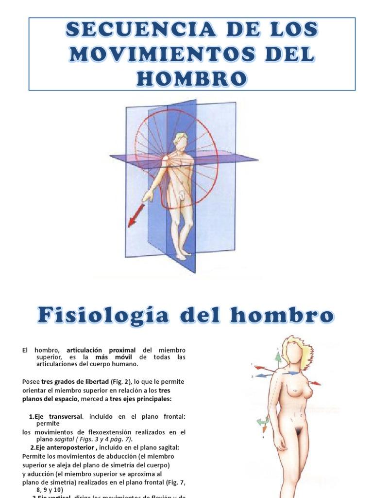Lujo Hombro Movimiento Anatomía Regalo - Anatomía de Las Imágenesdel ...