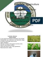 Universidad Nacional de Agricultura IV Lab