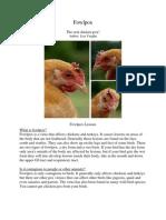 Fowl Pox