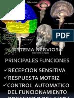 Trabajo Sistema Nervioso Central